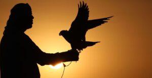 Falcoaria património UNESCO