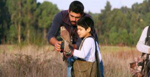 Aprender falcoaria