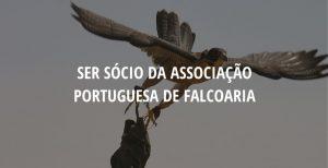 Ser sócio da Associação Portuguesa de Falcoaria