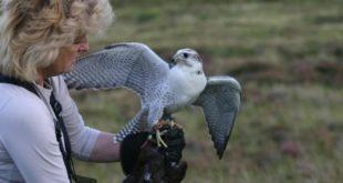 Artigo falcoaria sobre a falcoeira Diana Waltters