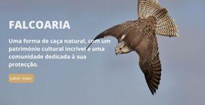 Apresentação site Associação Portuguesa de Falcoaria