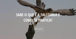 Sabe o que é a falcoaria e como é praticada. Clique aqui para saber mais