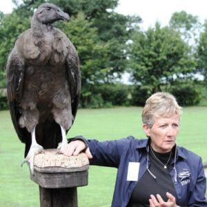 Jemina Parry Jones - Falcoeira e pioneira na Conservação de Aves de Presa