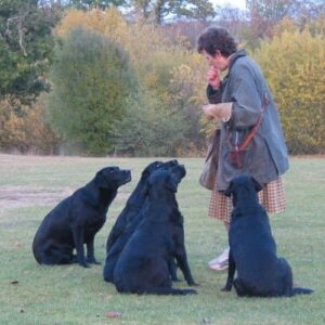 Jemina Parry Jones - Falcoeira e pioneira na Conservação e os seus Labradores