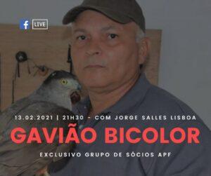Cartaz divulgação LIVE sobre Gavião Bicolor